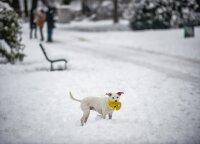 Orai: sniegas neužsibus, jau savaitės pradžioje laukia pokyčiai