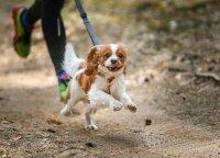 Artėja ypatinga diena šunų šeimininkams: siūlo daug linksmų būdų jai paminėti