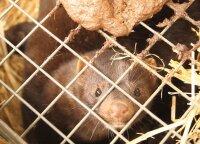 Lenkijos parlamentas pritarė kailinių žvėrelių fermų draudimui