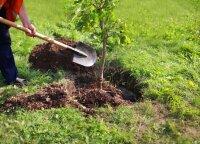 Kokius medelius ir kodėl geriau sodinti rudenį