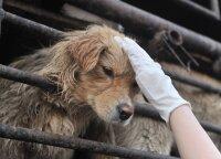 Koronavirusas ir pietryčių Azijos turgūs: elgesys su gyvūnais juose tebekelia grėsmę žmonių sveikatai