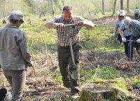 Ministerijos nesutaria, kaip atsodinti miškus