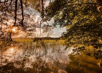 Įveistas miškas gali tapti gera pagalve pensijai