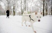 Pasiruoškite: į Lietuvą trumpam sugrįš žiema