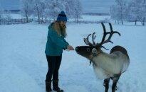 Šiaurės elniai ir šunų kinkiniai apylinkėse dažnesni nei žmones