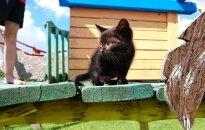 Mažytė Gli ieško namų ten, kur pažada ja rūpintis