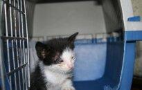 Žiauriai apleistas kačiukas prašo pagalbos