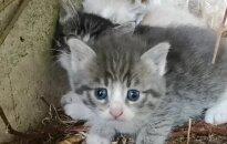 Gyvūnų prieglauda dalinasi jautriausiomis gyvūnų gelbėjimo akimirkomis ir kviečia nelikti abejingais