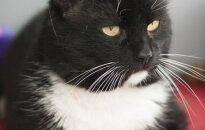 Tomio prašymas: katinėlis ieško namų