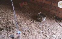 Šunelio laikymo sąlygos šokiravo gyvūnų gelbėtojus: prašo prisidėti prie gydymo