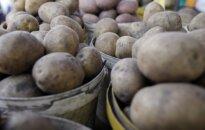 Kaip baigiantis žiemai nusipirkti kokybiškų bulvių ir kaip jas laikyti
