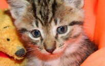 O aš gimiau būti laimingas: kačiukas ieško namų