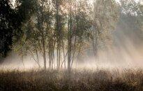 Mokslininkai atrado priežastį, kodėl augalai neiškepa plieskiant saulei