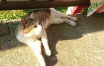 Šaunusis katinas Lumas ieško namų