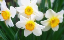 Astrologės Lolitos prognozė kovo 29 d.: ryžtingų veiksmų diena