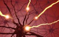 Mokslo ekspresas. Neuronas