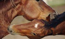 Vienintelė Lietuvoje žirgų prieglauda užveria savo duris