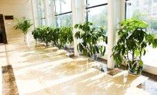 Mokslininkė įvertino kambarinius augalus: kokia iš tiesų jų nauda?