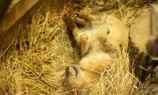Zoologijos sodas savaitgalį švęs garbingą sukaktį