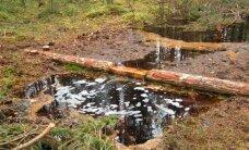 Klampiausias Lietuvos miškas: bandant nusausinti paniro net ekskavatorius