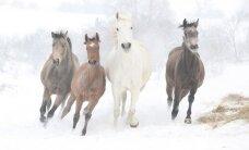 Ką kiekvienam Zodiako ženklui atneš 2014-ieji - medinio Arklio metai