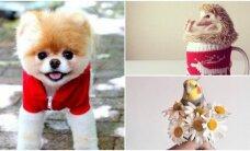 """Reto mielumo nuotraukos: gyvūnai žvaigždės """"Instagram"""" tinkle"""