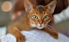 Specialistas apie gyvūnų ženklinimo poveikį jų sveikatai