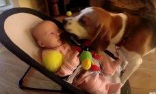 Šuo atėmė iš kūdikio žaislą, o tuomet... Turite tai pamatyti!