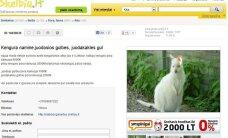 Už 6000 eurų lietuviams siūloma įsigyti kengūrų