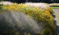 Kupstinės šluotsmilgės (Deschampsia cespitosa) smulkūs žiedynai – tarsi lengvas rūkas tarp rudbekijų ir serenčių.