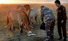 Vladimiras Putinas šeria Pševalskio arklius