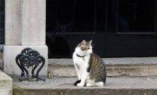 Katinas gatvėje (asociatyvi nuotr.)