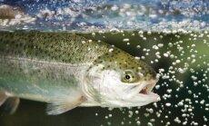 Upėtakių žvejoti nebeleidžiama