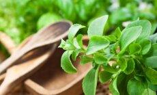 Augalai, kurie pasaldins gyvenimą: kurie yra sveikiausi