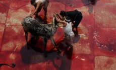 Galvijai skerdžiami musulmoniškoje Eid-al-Adha šventėje Pakistane