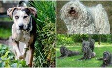 Keisčiausi pasaulio šunys