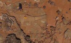 Australijoje rastas galbūt didžiausio dinozauro pėdsakas