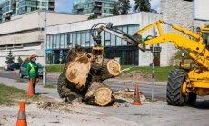 Išpjauti medžiai Žvejų gatvėje