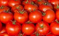 Renkamės geriausią pomidorų veislę: kaip nepasiklysti?