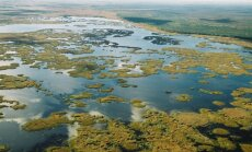 Plaukiojančios salos Žuvinto rezervate