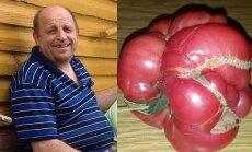 Valdas Bernatavičius ir jo milžiniškas pomidoras