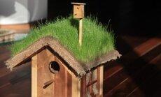 Besirūpinantiems paukščiais: metas kelti inkilus