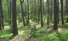 Spindžiaus miškas