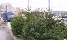 Kalėdų eglutės