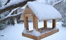 Sparnuočių priežiūra žiemą: svarbiausia lesyklos, bet nepamirškite ir inkilų
