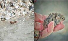 Peliukas, išgelbėtas iš vandens