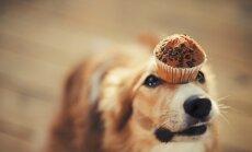 Per užgavėnes šunų negalima lepinti skanėstais nuo stalo