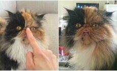 Katinas gremlinas