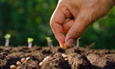 Planuojame daržą: ar verta pirkti ekologiškas sėklas