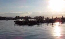 Neįprastas vaizdas: iš vienos salos į kitą plaukė 200 ponių